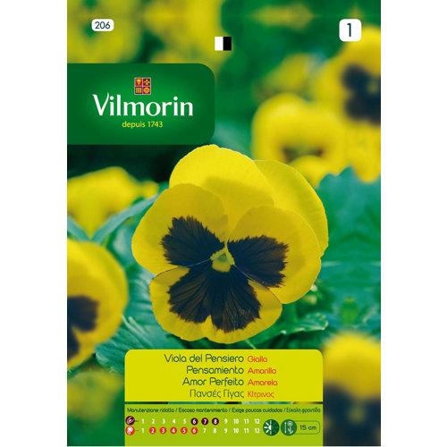 Semilla de pensamiento flor grande amarilla