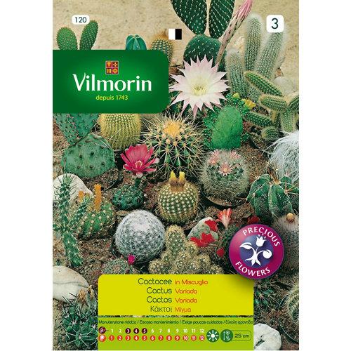 Semilla cactus variados