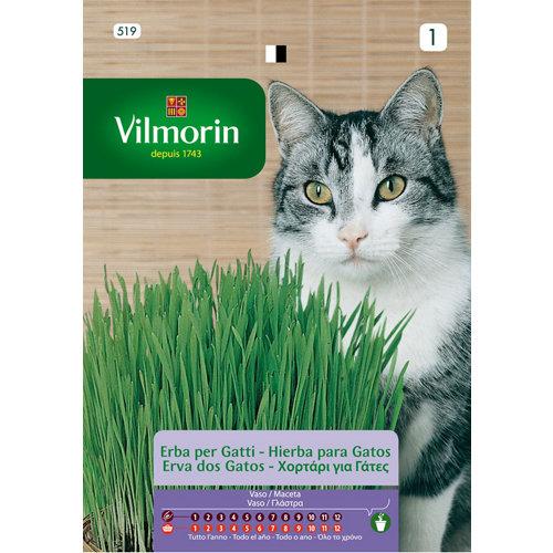 Semilla de hierba para gatos