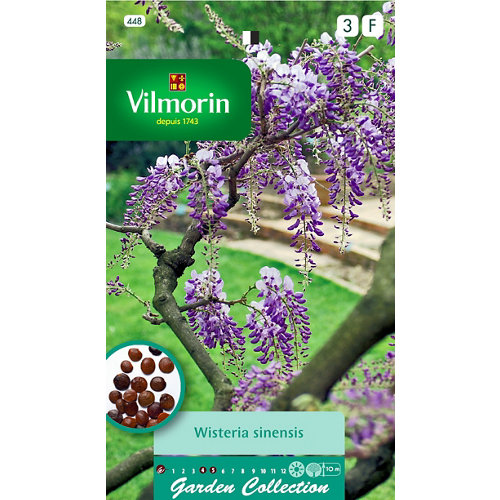 Semilla de glycine wistaria de china