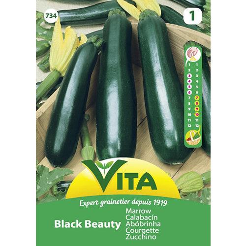 Semillas de calabacín black beauty