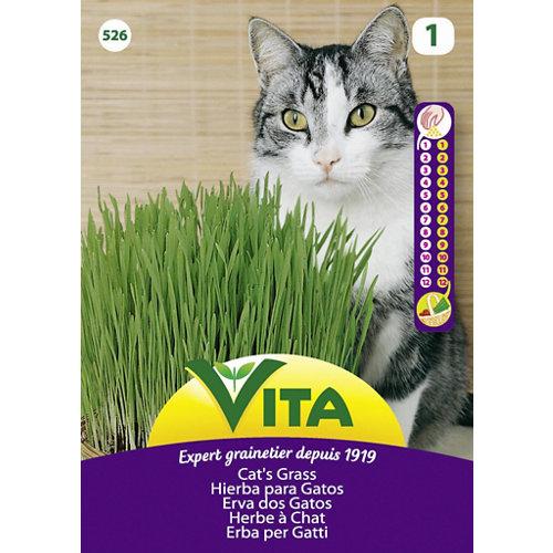 Semillas de hierba para gato